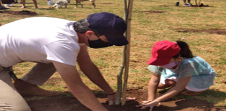 Arborizar